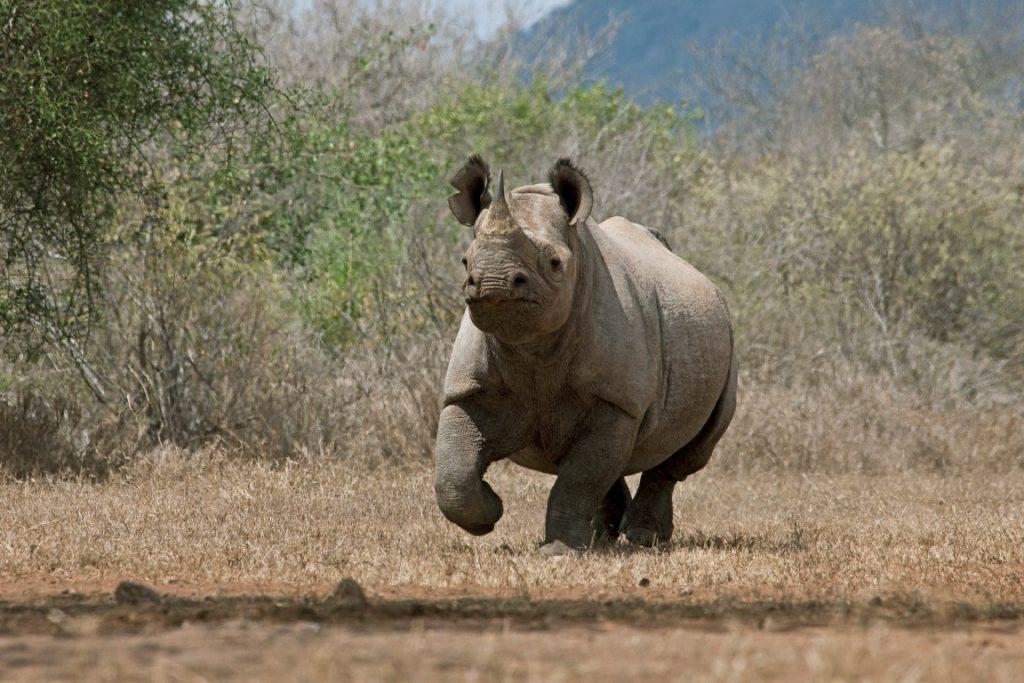 tanzania parks adventure go local keep discovering africa treasures